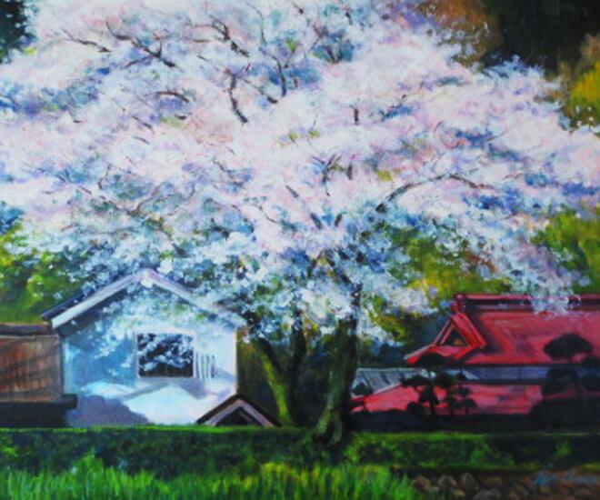 真盛る桜樹(油彩、F8 455×380cm、¥60,000 額なし)