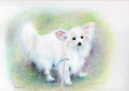 ペットのイラスト犬2